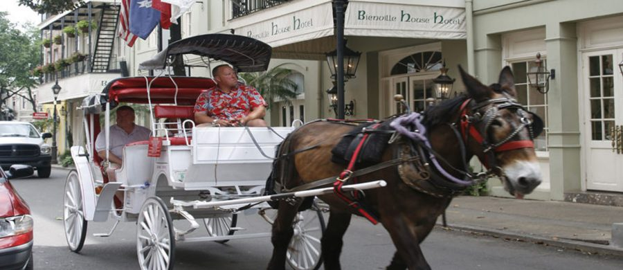 New Orleans'ABC Horse ride